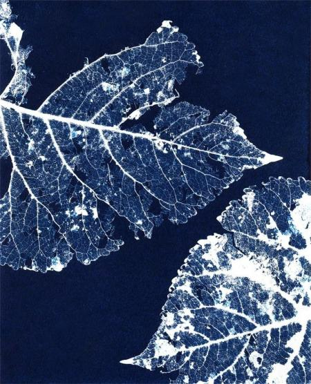 Blue Leaf 2 Cyanotype by Gloria de los Santos on Flootie.com