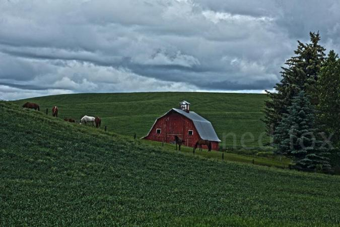 red barn in the Palouse by NED FOX