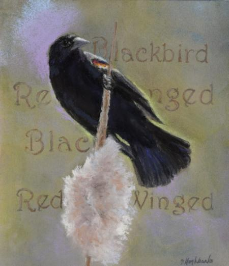 Red-winged Blackbird by debbie hughbanks on Flootie.com