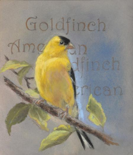 American Goldfinch by debbie hughbanks on Flootie.com