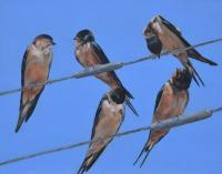 The Swallows' Tale by debbie hughbanks on Flootie.com
