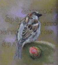 Sparrow by debbie hughbanks