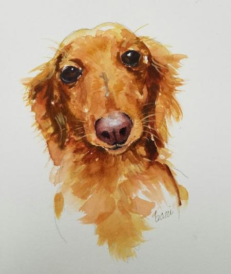 Long Haired Dachshund on Flootie.com
